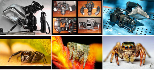 Three Super Macro Rigs You Can Build At Home