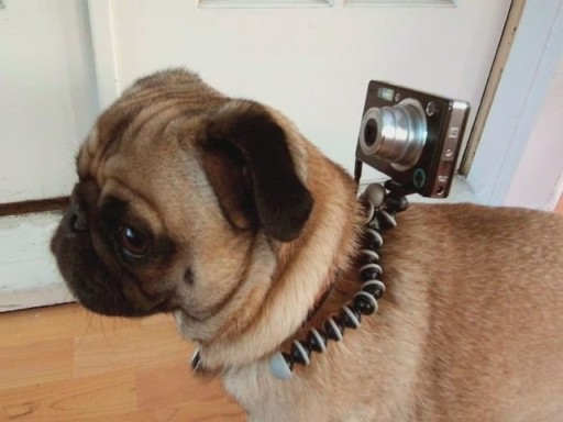 Long Before Sony Did It, Jenny Had A Dog Mounted Action Cam