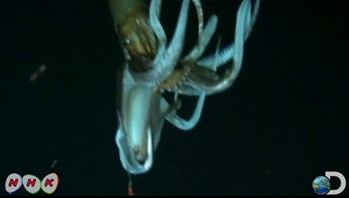 How Hige-Res Footage Of A 2 Stories Kraken (Giant Squid) Was Taken