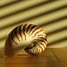 Nautilus in venetian light beams (StephenCotterellPhotography)