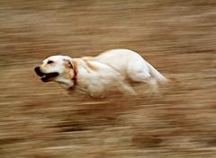 shutter_speed_panning