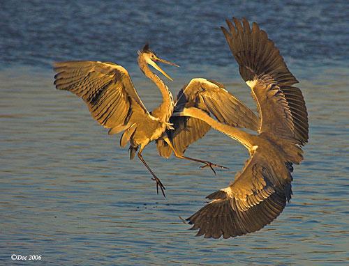 stork - shutter speed: 1/1000