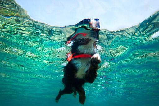 Dog swimming underwater