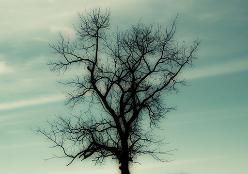 Lonely Tree, Guyer Photography
