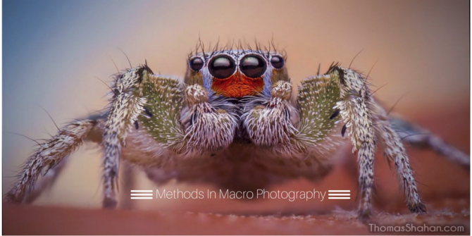 Thomas Shahan Shares His Methods In Macro Photography