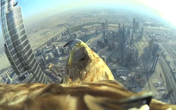 Sony 4K Eagle-Cam Used to Capture a Record-Breaking Wildlife Awareness Campaign