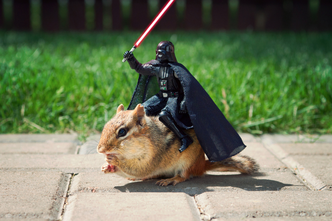 Photographer Gets Wild Chipmunks to Play Star Wars
