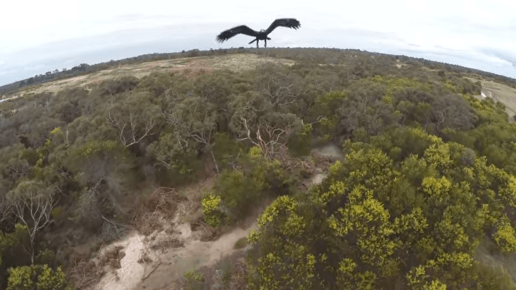Mining company loses 9 surveillance drones – because of eagles