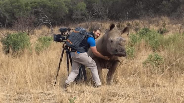 Rhino approaches cameraman for a nice belly rub