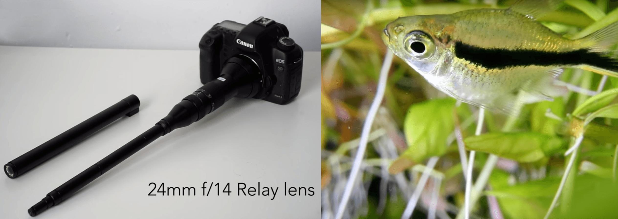 Sample footage with weirdest lens ever: Laowa 24mm f/14 telescopic macro  lens - DIY Photography