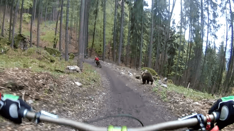 Action camera captures bear chasing a cyclist