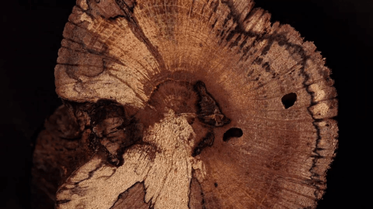 Filmmaker creates epic stop motion video from cross-sectional photos of wood