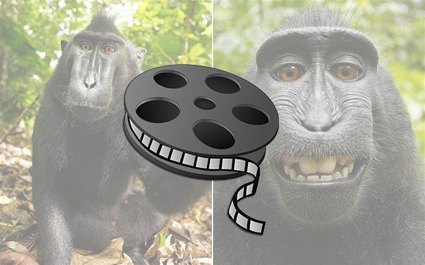 """A """"monkey selfie"""" movie might be coming soon"""
